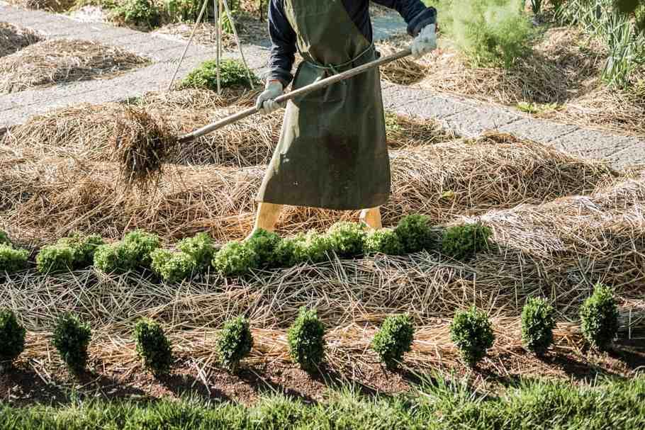 Quels livres choisir pour démarrer un jardin de permaculture?